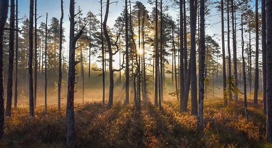 Naturreservatet Tiafly. Foto Martin Wargren.