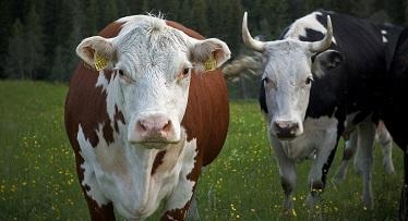 Köttdjur