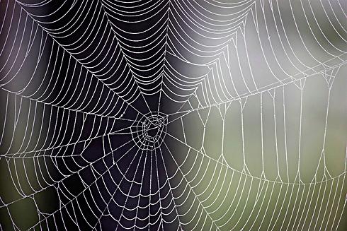 Spindelväv