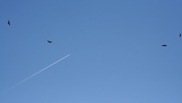 Flygplan på himmel. Foto från morguefile.com