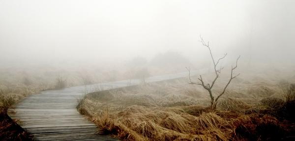 Gångväg i dimma. Bild från Pixabay.com