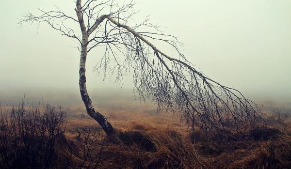 Foto av träd av cocoparisienne på Pixabay.com