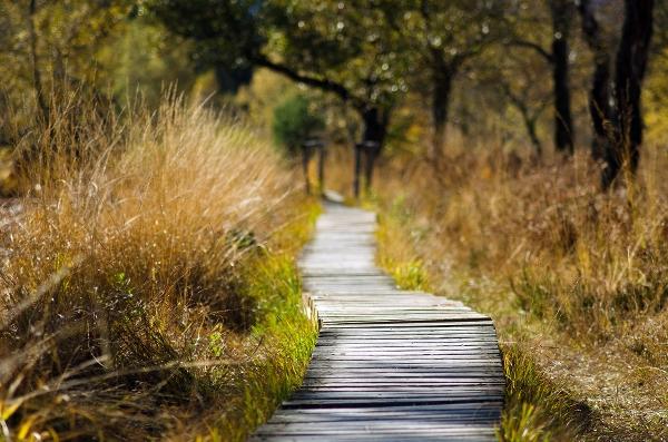 En enslig stig. Foto av smellypumpy på Pixabay.com