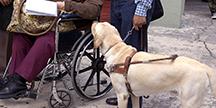 En person i rullstol och en synskadad med sin ledarhund. Foto
